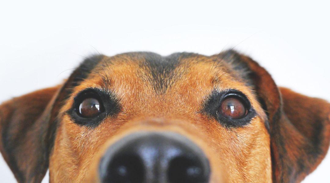 Dyslexia Dogs